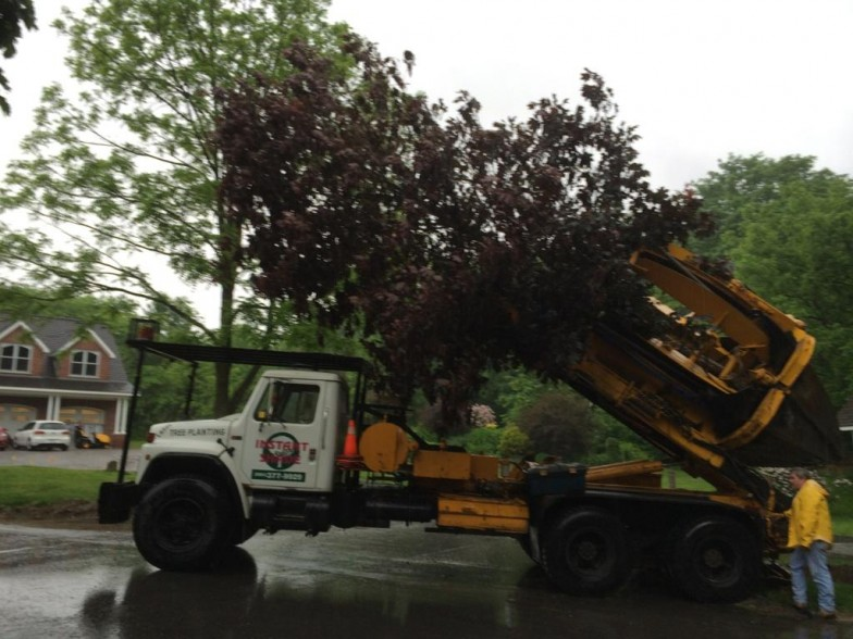 Tree Services in Cobourg, ON